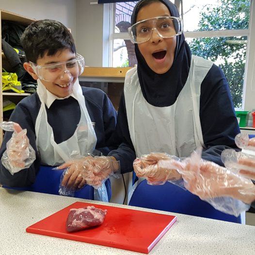 Radford Primary Academy dissect a heart!